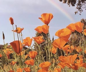orange, rainbow, and aesthetic image