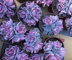 purple and plants image