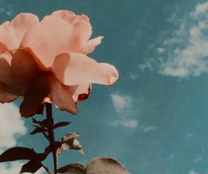 rose, sky, and love image