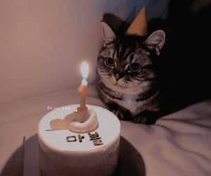 cat, cute, and birthday image
