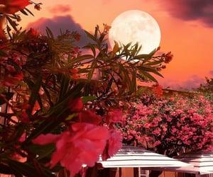 adventure, garden, and summer image