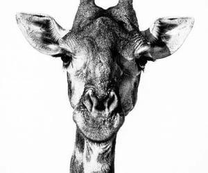 animals, art, and black and white image