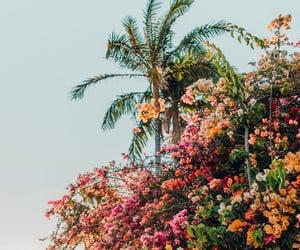 Image by Adriana Adriana