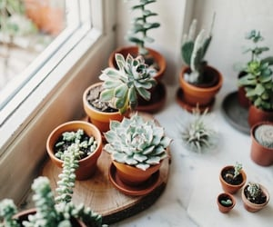 plants, green, and inspiration image