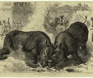 africa, animal, and book image