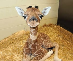 awwwww, haha, and adorable animals image