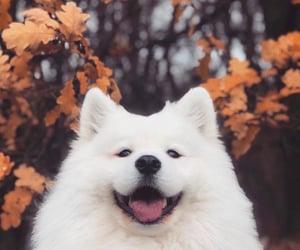 autumn, dog, and cute image
