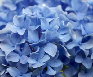 blue, colorful, and flowers image