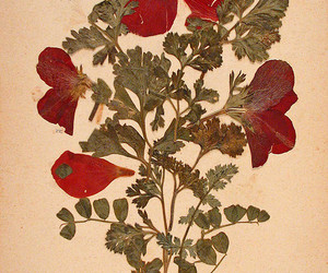 flowers, herbs, and pressed flowers image