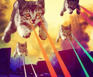 cat, laser, and funny image