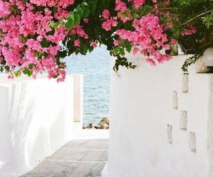 flowers, pink, and sea image