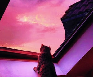 cat, sunset, and sky image