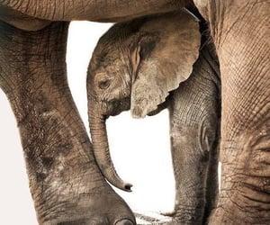 Animales, belleza, and elefante image
