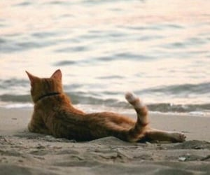 cat, summer, and beach image