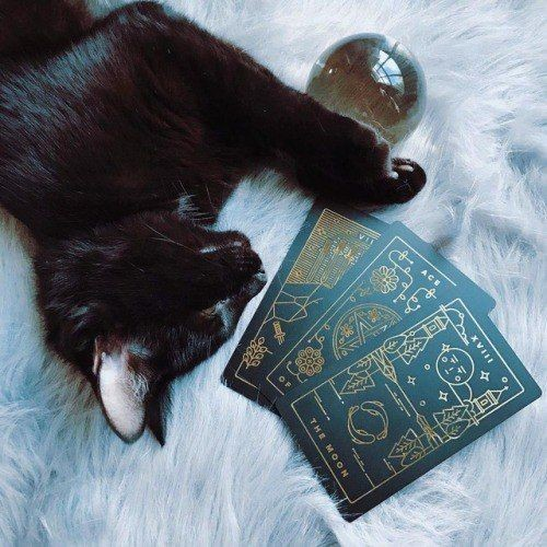 witch, cat, and magic image