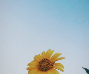 nature, summer, and sunflower image