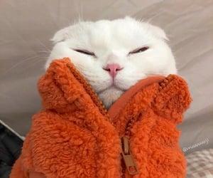 animals, autumn, and blanket image