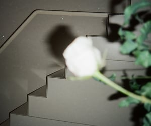 35mm, analog, and flower image