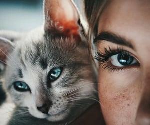 animal, blue, and popular image