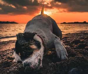 beach, dog, and sand image