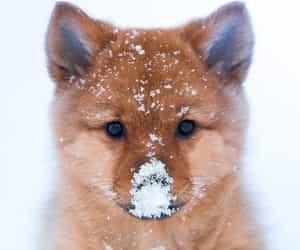snow, cute, and animal image
