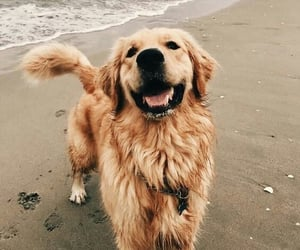 dog, animal, and beach image