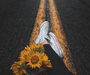 photography, flowers, and sunflower image