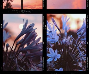flowers, grain, and nature image