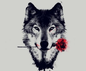 animals, wallpaper, and wolf image