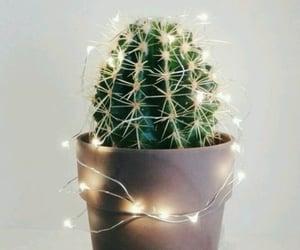 cactus, christmas, and lights image