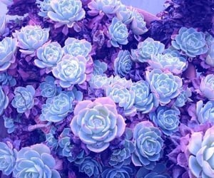 purple, flowers, and blue image
