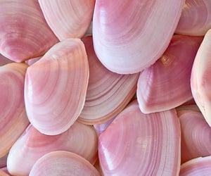 pink, shell, and aesthetic image