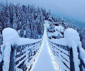 winter, nature, and bridge image