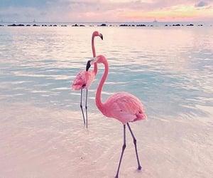 beach, pink, and flamingo image