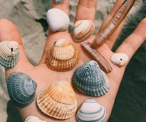 beach, shell, and vsco image