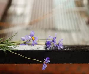 flower, تفاصيل, and ًورد image