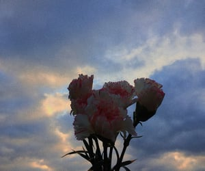 aesthetic, blue, and carnation image
