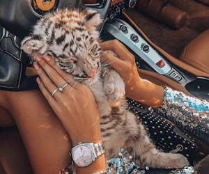 baby, car, and lion image