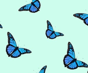 butterfly, style, and wallpaper image