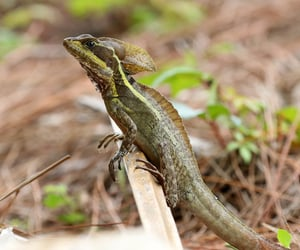 animal, lizard, and lizards image