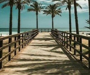 beach, summer, and palm trees image