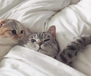 cat and animals image