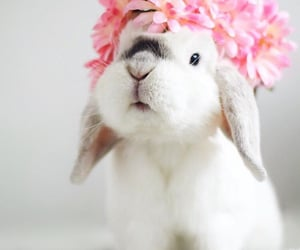 animal, cute, and flowers image