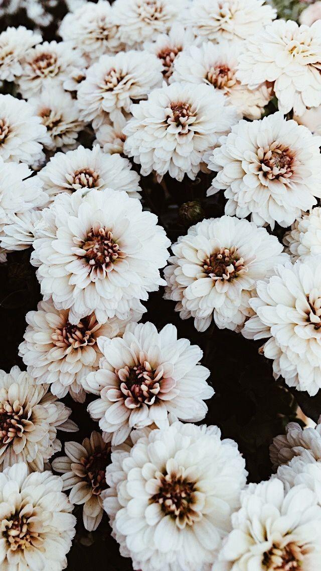 Flowers Wallpaper Aesthetic