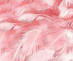 pink, feather, and wallpaper image