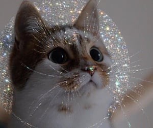 cat, animal, and glitter image