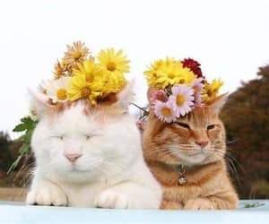 animals, cat, and cats image