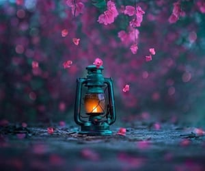 photography, flowers, and pink image