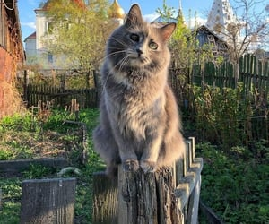 cat, country, and nature image