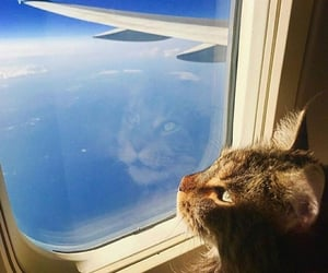 cat and Flying image